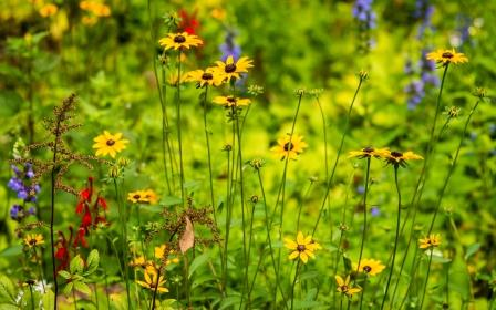 DSC_2045 wild flowers in meadow comp Bob Leitch