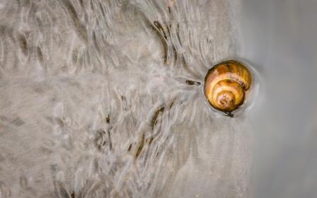 DSC_2056 snail in water comp Bob Leitch