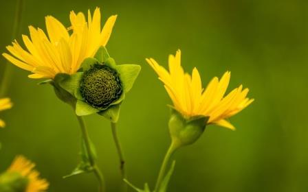 DSC_2058 yellow flower comp Bob Leitch