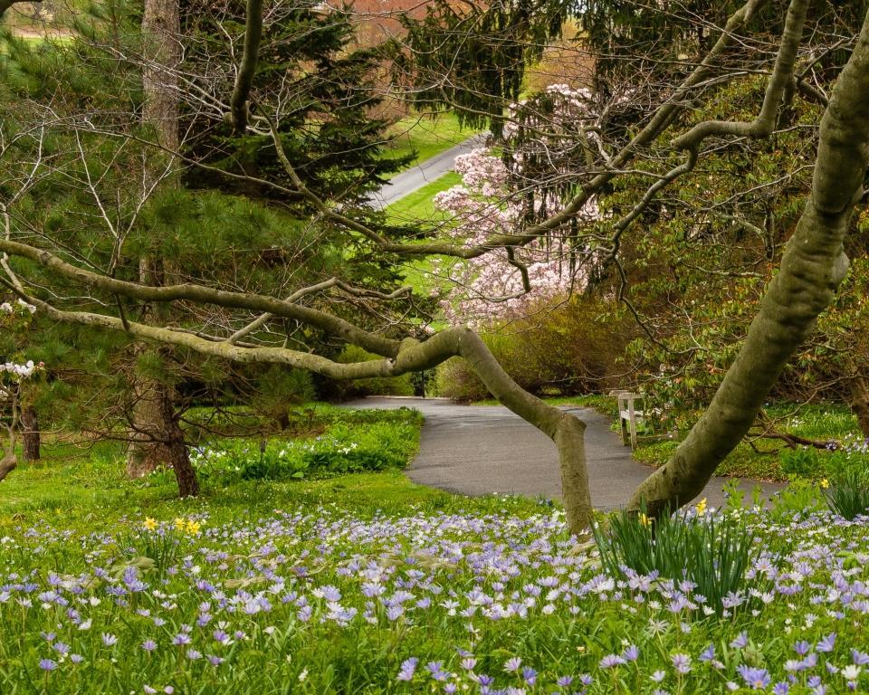 dsc_8666-magnolia-bend-compressed