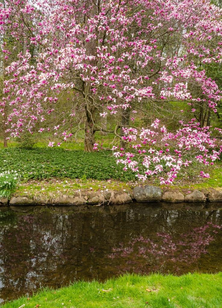 dscn0707-magnolia-compressed
