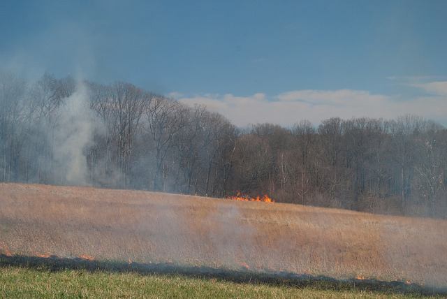 Burn on both sides of the field