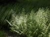 Pinetum ferns dappled with light