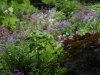Many-hued sea of candelabra primroses (Primula spp.) floods the Quarry Garden floor