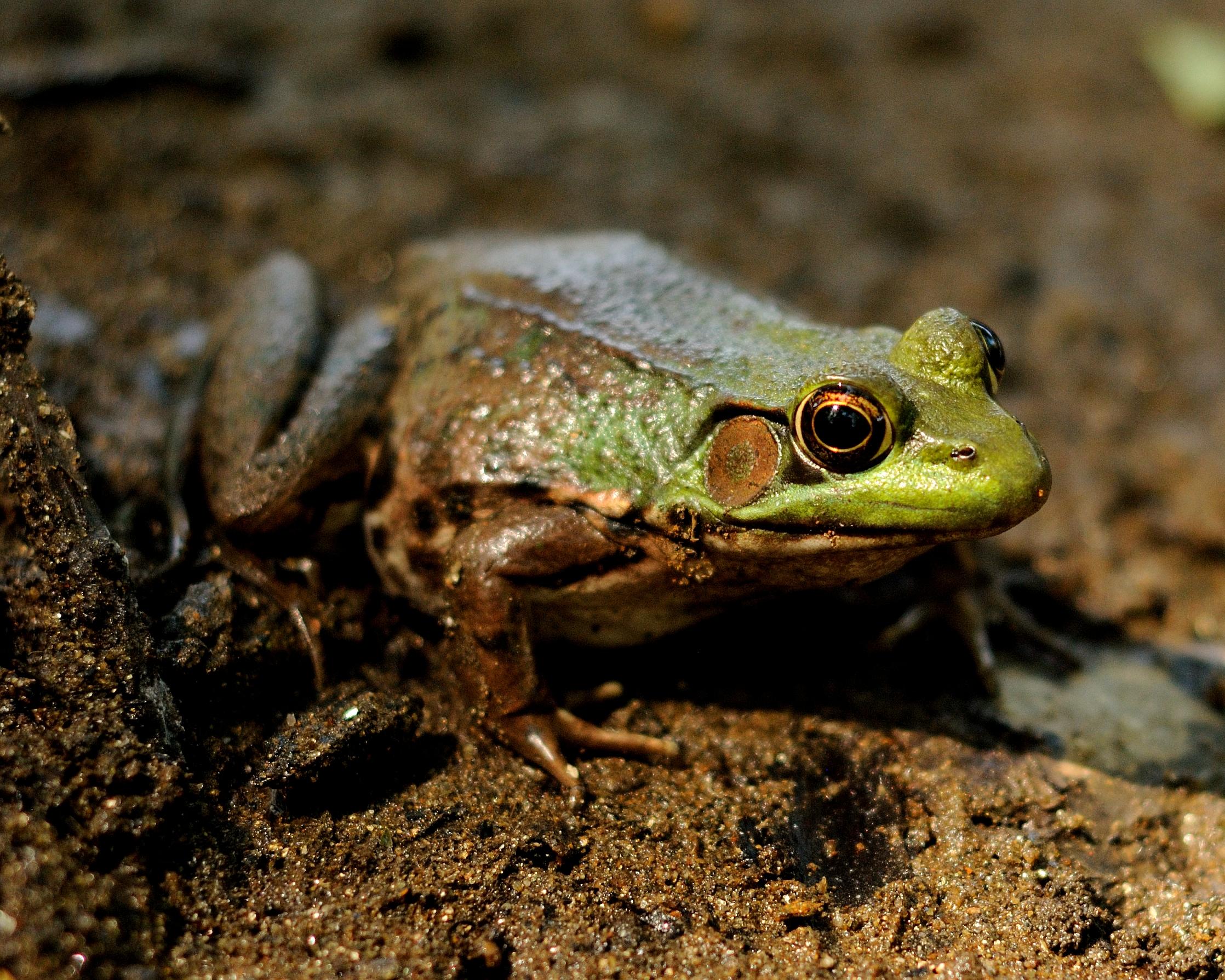 greenfrog2