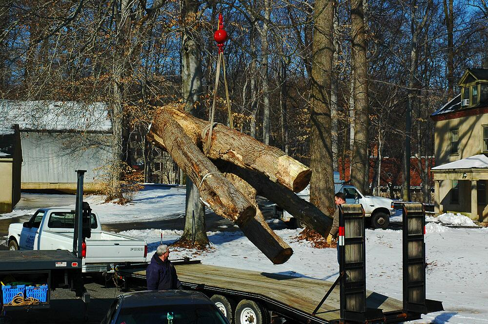 Tree Getting Lowered