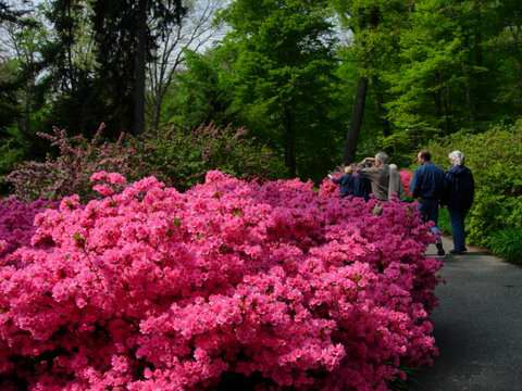 51309wed-at-winterthur-walk-with-people