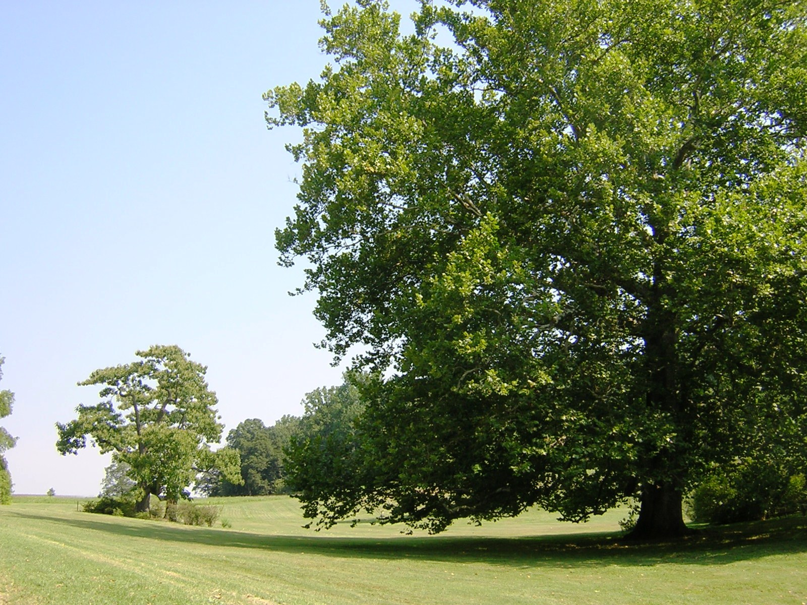 sycamore hill 8-24-2006 kls