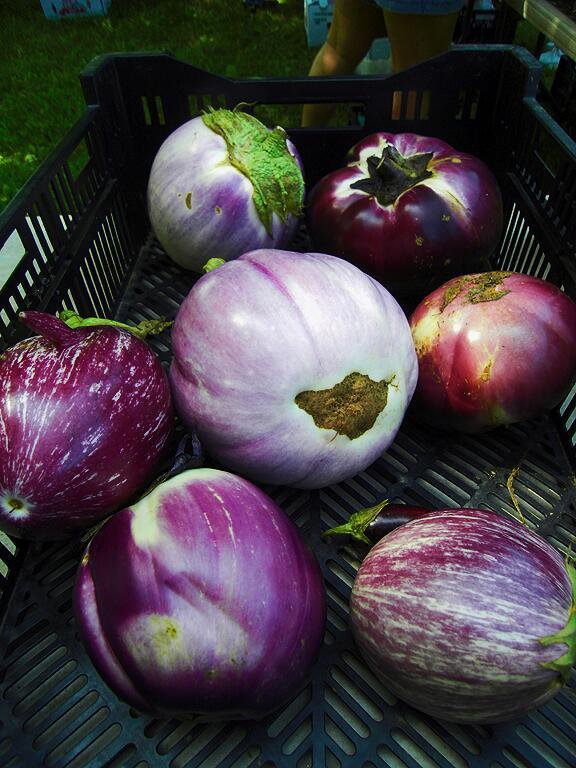 DF_eggplant