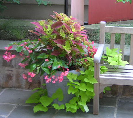 plants for a beautiful summer container garden Included