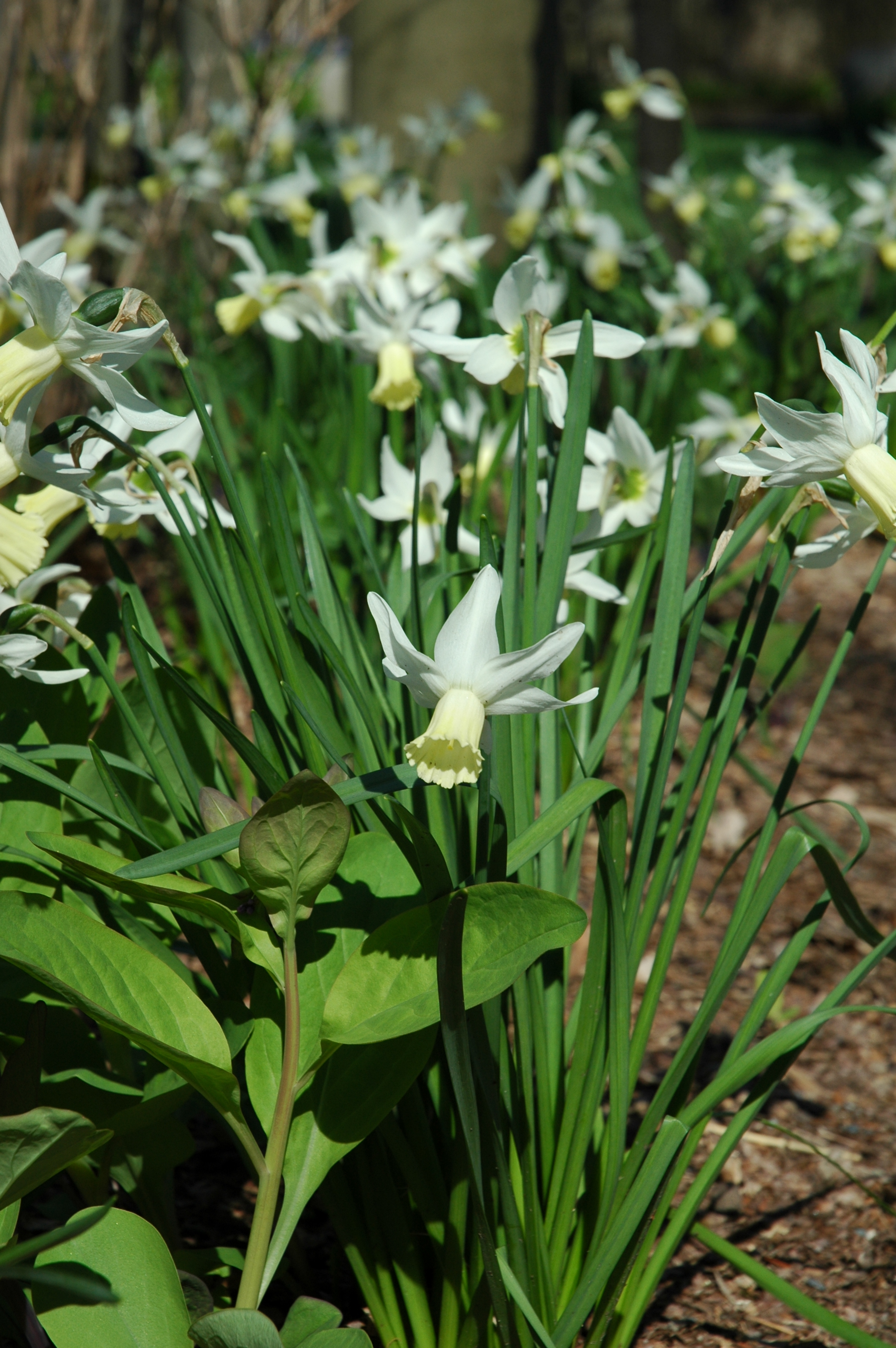 Legends/myths about flowers?