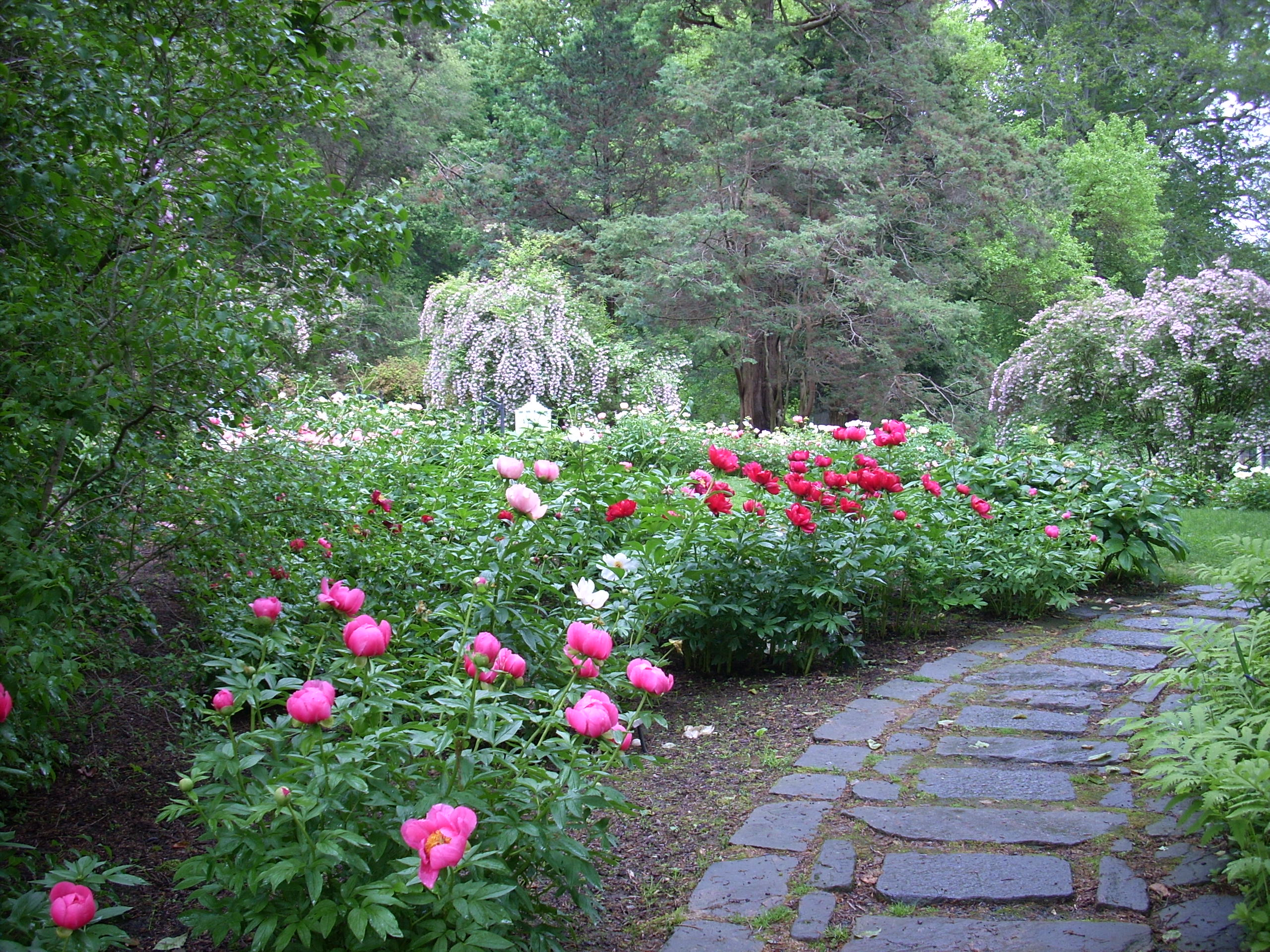 Garden designs with peonies pdf for Design in garden