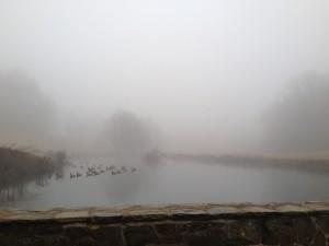 Fog.1.14.2012.pond