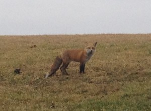 Fox1.15.2012.MG