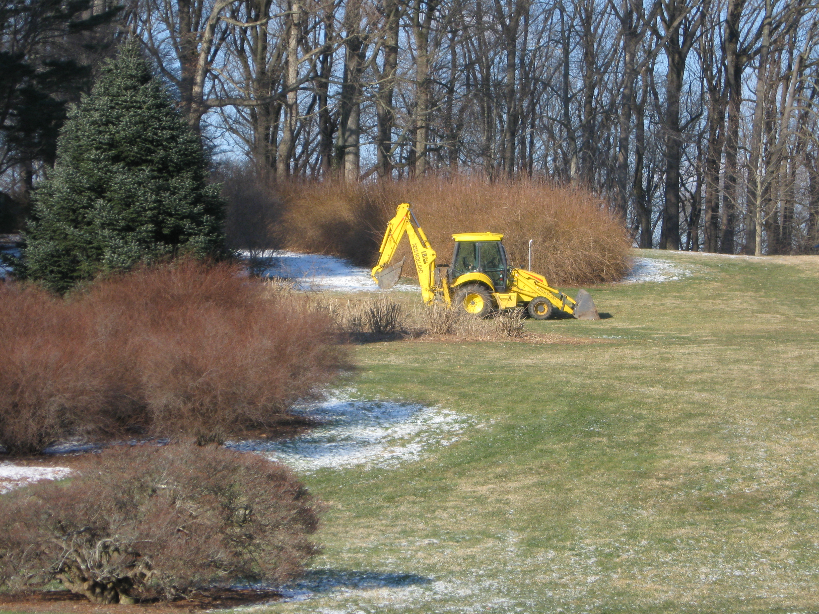 Pruning of lower forsythia bed