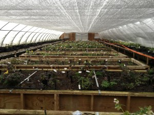 pine knot prop greenhouse
