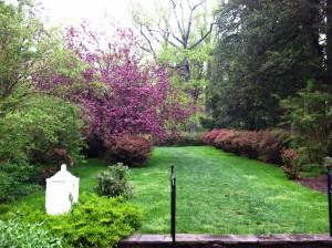 04.29.2013 azaleas in peony garden