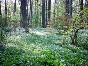4-16 spring ephemerals