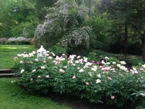 peony garden 5.23.2014 kls