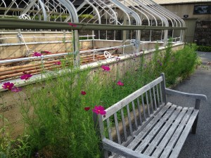 Bench by greenhouses 8.1.2014 kls