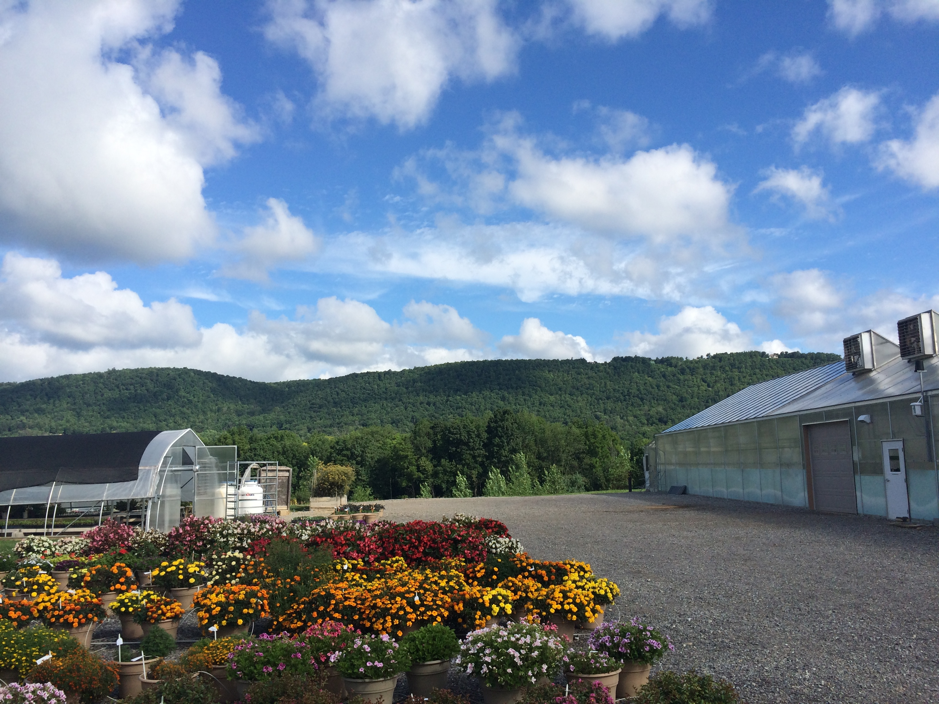 Beautiful Sky (PSU Colors)and Greenhouses at Garden Genetics