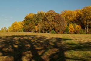 native woodland