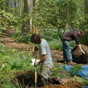 5-20 tree planting