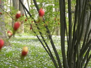 Just a little color on azaleas in Azalea Woods