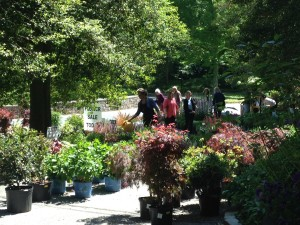 Plant Sale - Sunday 10a-3p!