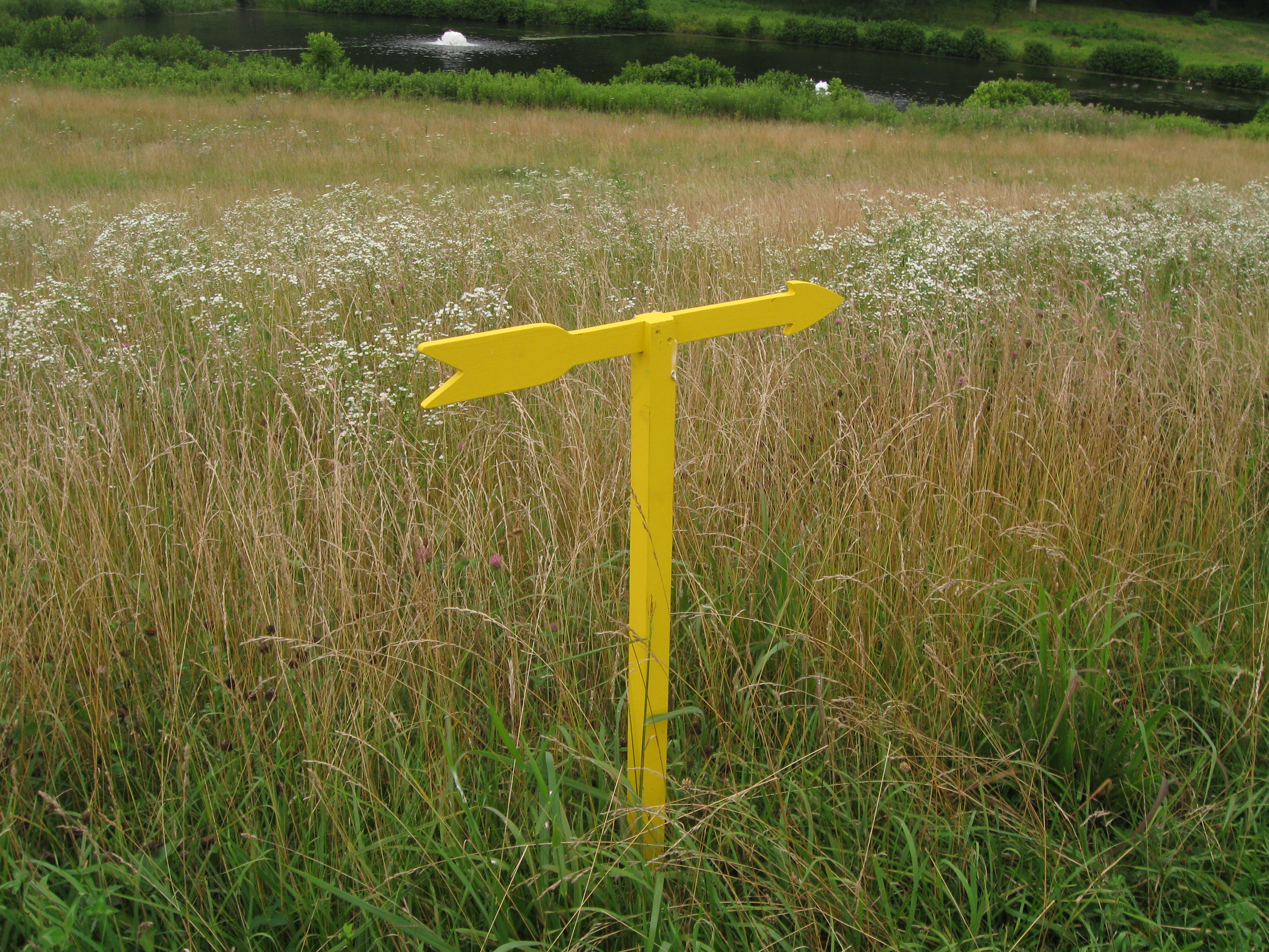 Yellow Arrow in the Field