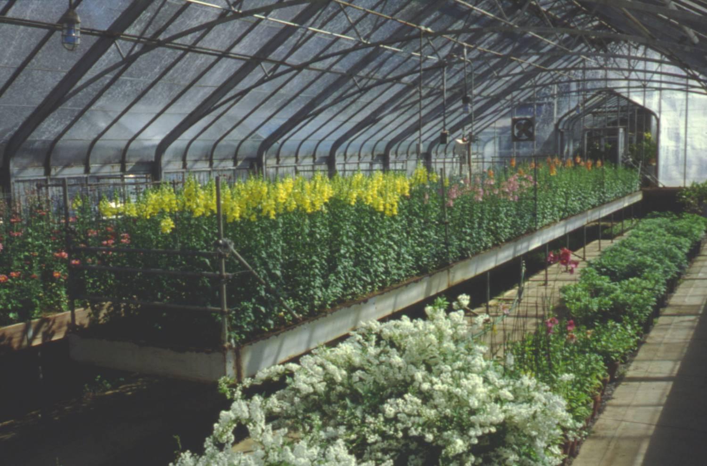4-6 greenhouse