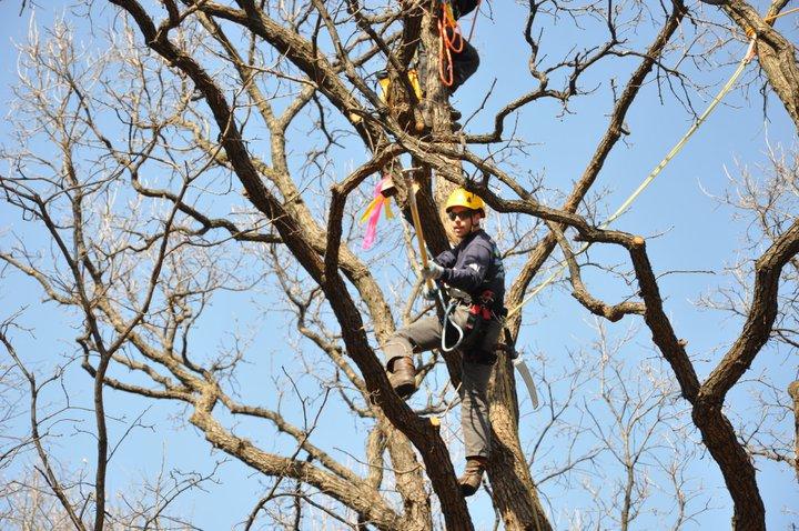 6-8tree climbing