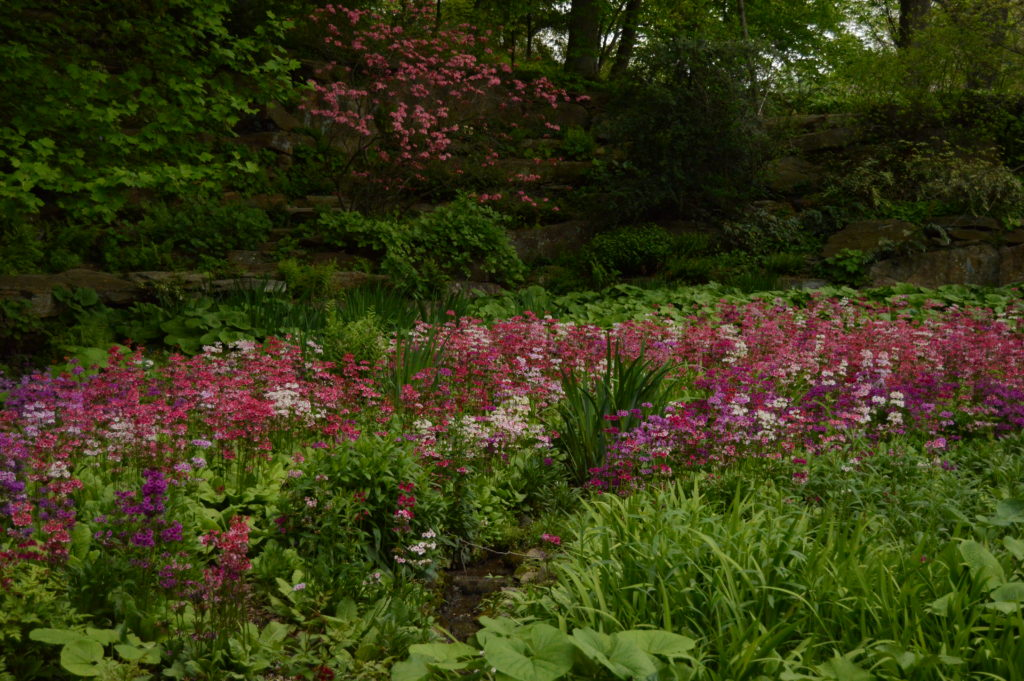 The Quarry Garden awash with color