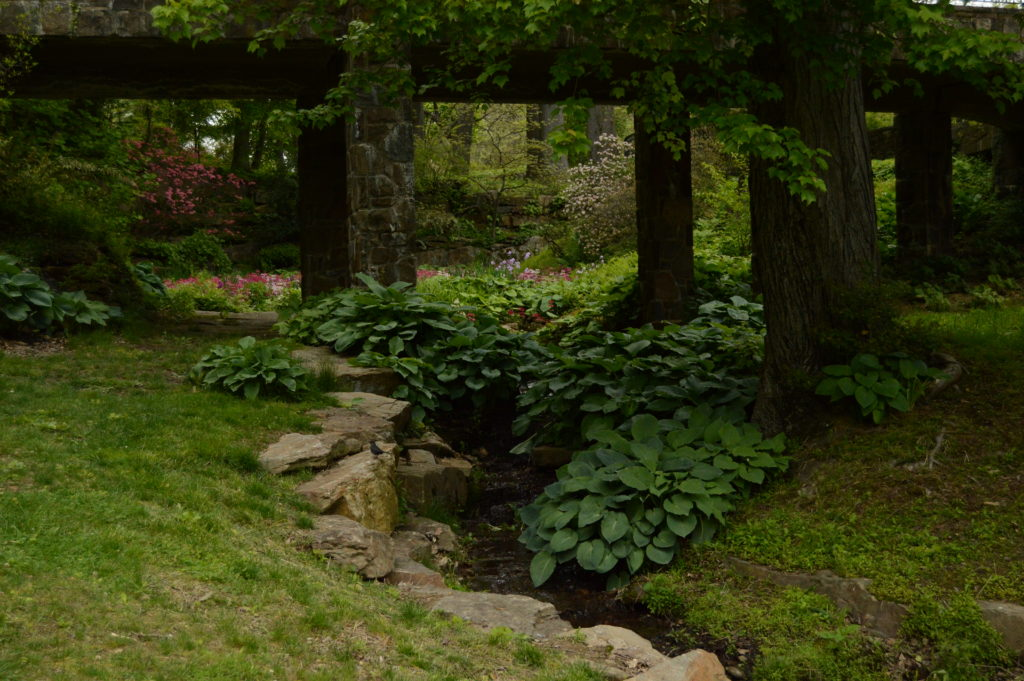 Parting view: Sea-green hostas lap the edges of the Quarry Garden's defining rivulet