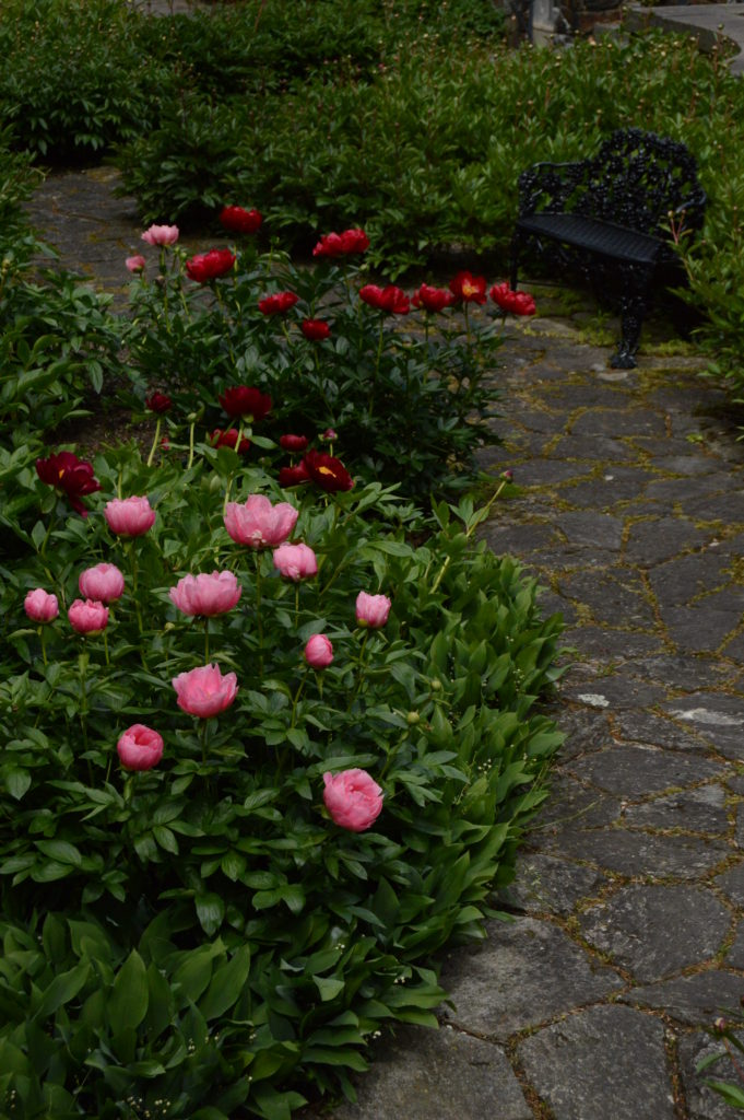 View of the Lower Peony Garden