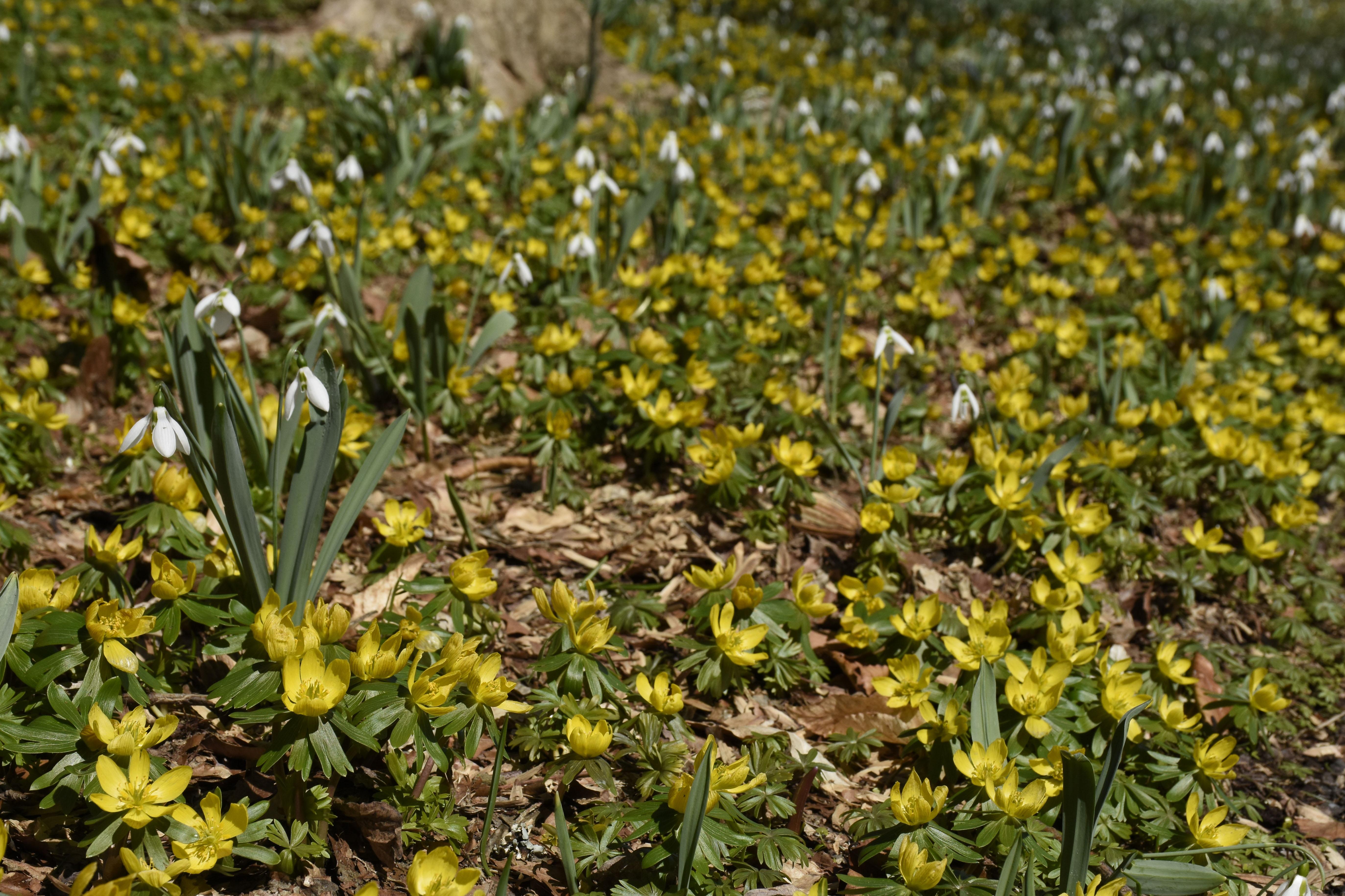 _DSC0634-ed « Winterthur Garden Blog
